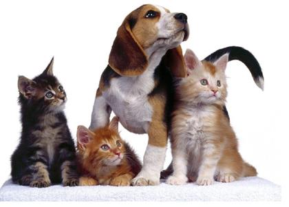 hogares con mascotas