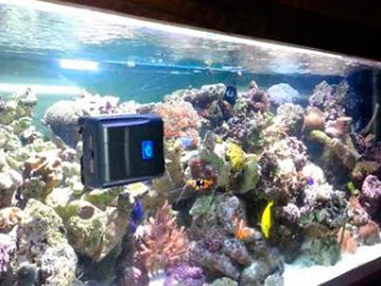 robot robosnail en acuario